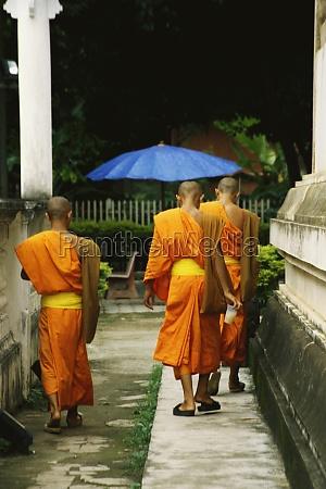 rear view of buddhist monks walking