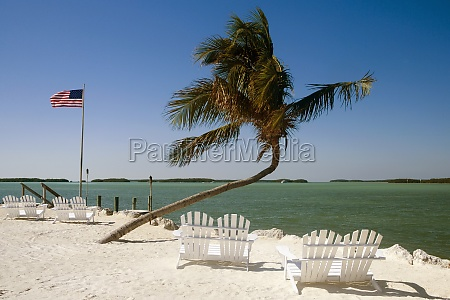 empty adirondack chairs and a palm