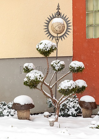 ornamental tree and garden decoration in