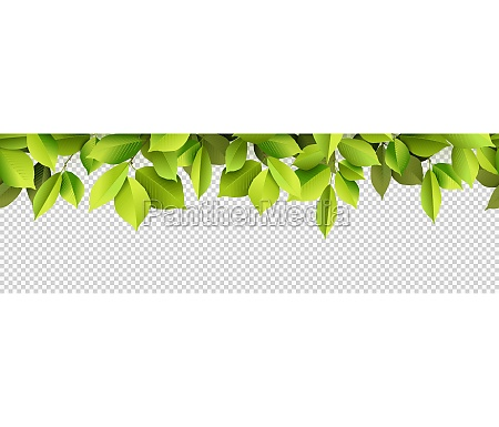 green leaves panorama background