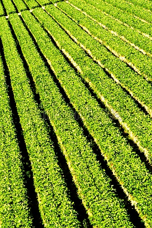 high angle view of crops on