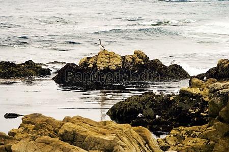 waves flowing past rocks in a