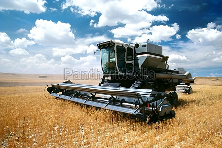 custom harvest combine harvest wheat near