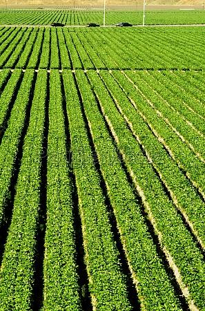 truck garden crops in southern california