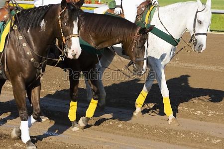 three jockeys riding horses on a