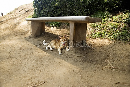 cat lying under a bench la