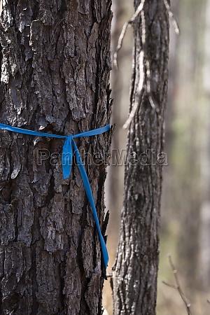 blue ribbon marking a tree