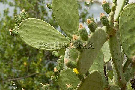 closeup of cactus cinque terre national