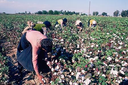 people picking cotton near tarsus turkey