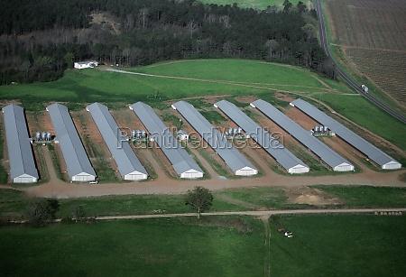 industrial chicken farm georgia
