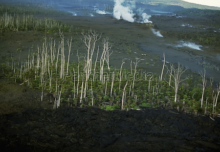 trees killed by lava flows hawaii