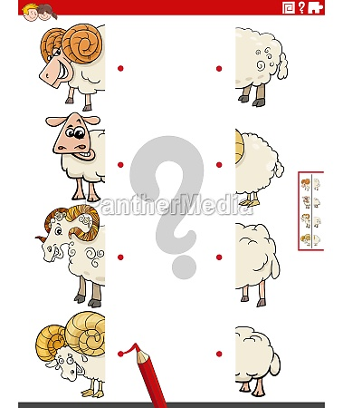 match halves of pictures with sheep