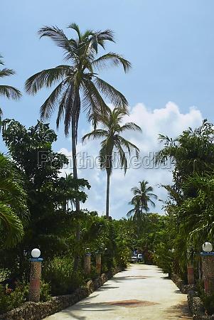 trees along a walkway san andres
