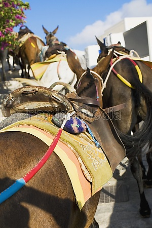 close up of a horse with