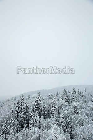 highlands covered with snow and ice