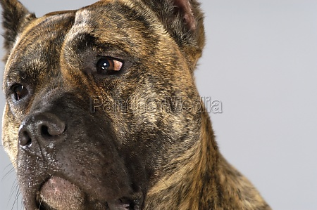 close up of a boxer