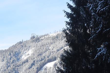 trees in a winter landscape