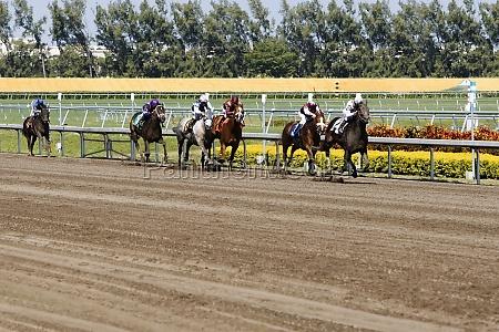 group of jockeys riding horses in