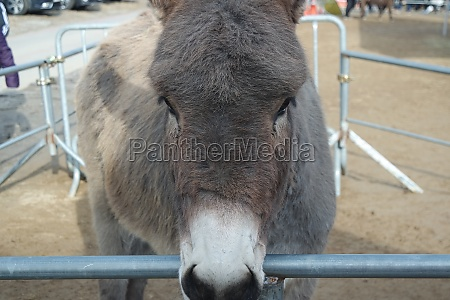 close up on a donkey head
