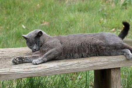 grey cat on a seat