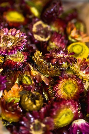 close up of dry flowers at