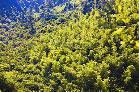 high angle view of trees in