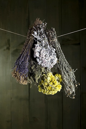different bouquets of herbs hanging in