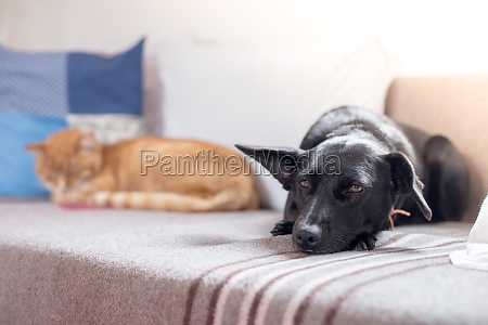 cat and dog on the sofa