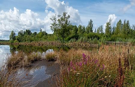summer landscape in the schwenninger moos