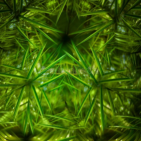close up of tropical leaves