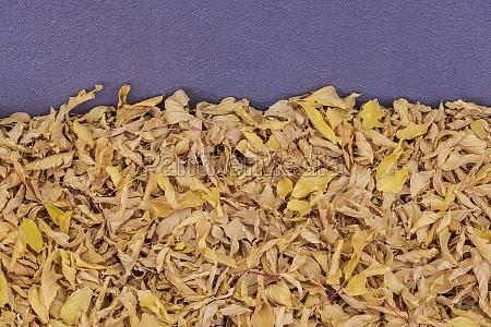heap of fallen autumn leaves