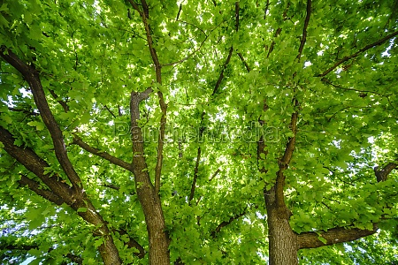 green tree branches