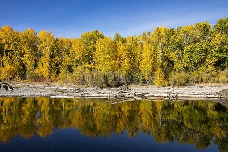 usa idaho sun valley yellow autumn