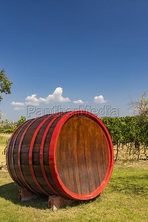 wine barrel in vineyard tuscany italy