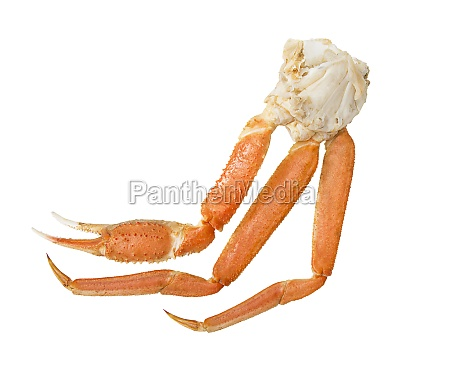snow crab cluster on