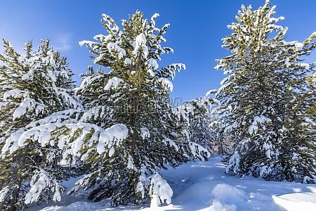 usa idaho sun valley snowfall on
