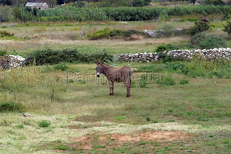donkey in a field looking at