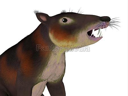 cronopio mammal head