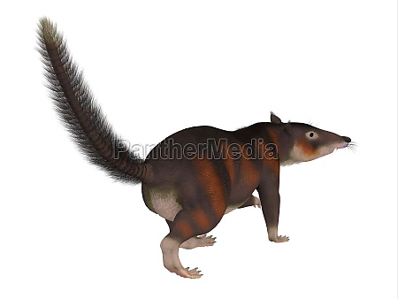 cronopio mammal tail