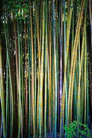 green bamboo fence texture background