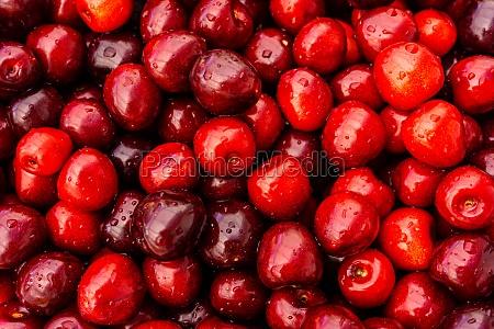 cherry fruit background cherry texture pattern