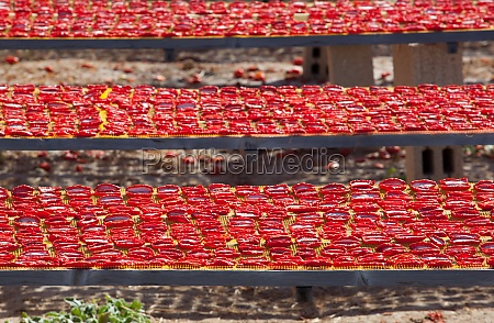 dried red ripe tomatoes