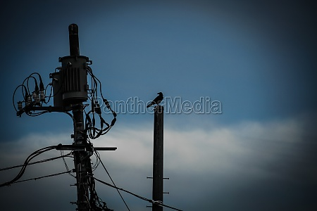 crow and a utility pole silhouette
