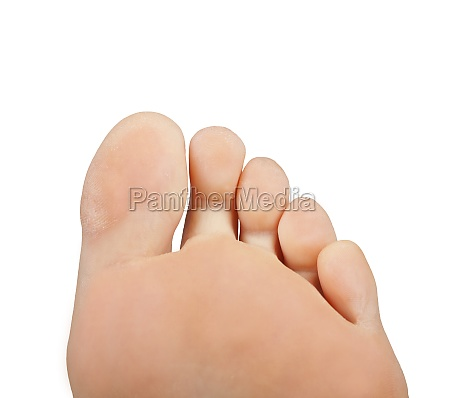 toes isolated on white background
