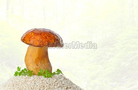 big mushroom with raw rice
