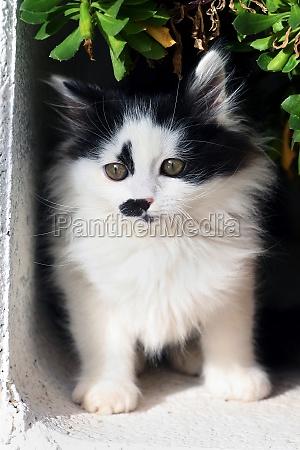 puppy persian cat in the garden