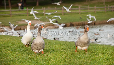 different species of birds at lake