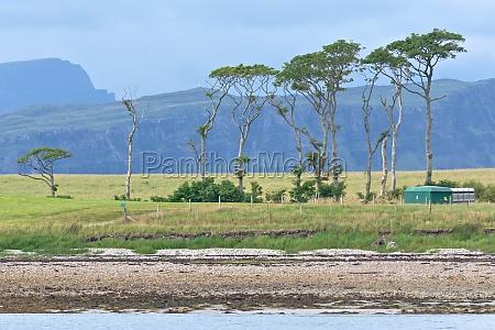 unusual group of tall coastal trees