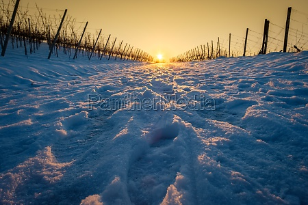 winter snow road in vineyard with