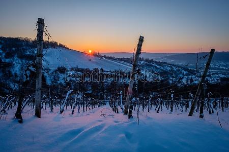 sunrise in winter snow vineyard landscape